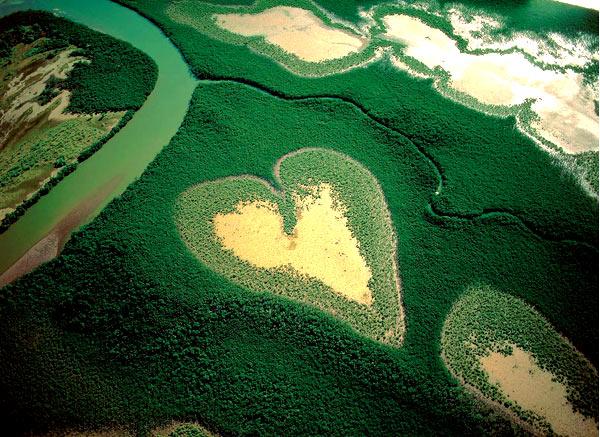 сердце в джунглях